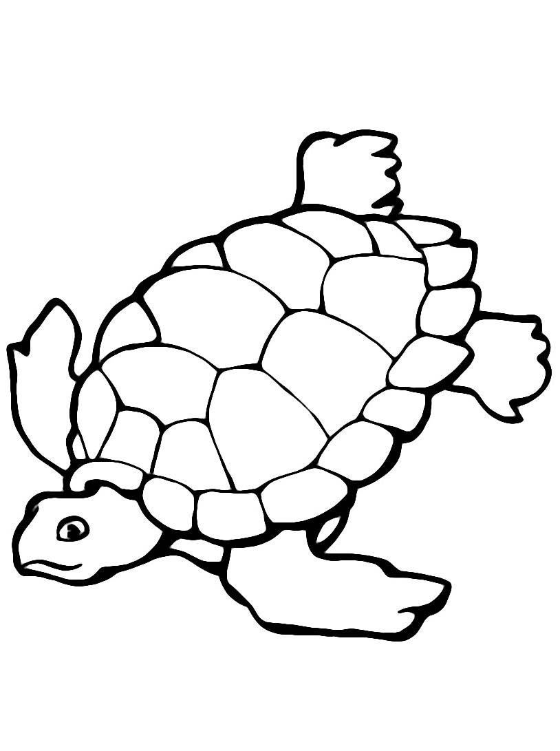Tartaruga da colorare 48