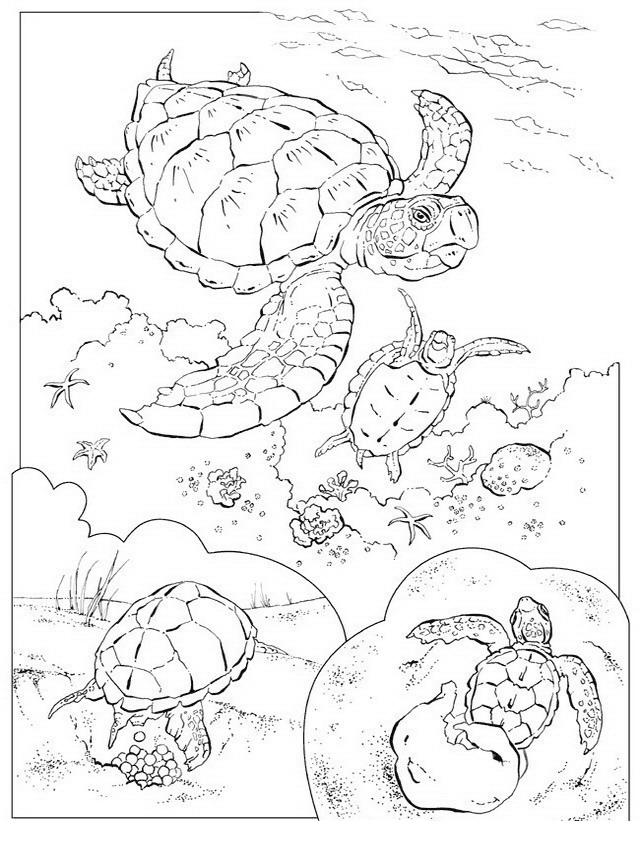 Tartaruga da colorare 52