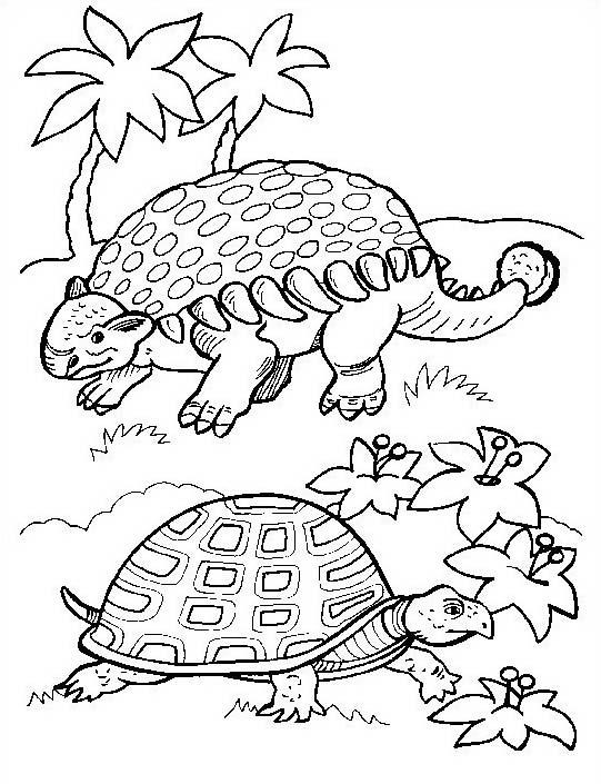 Tartaruga da colorare 55