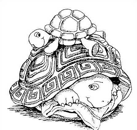 Tartaruga da colorare 57