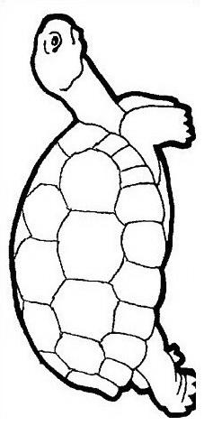 Tartaruga da colorare 59