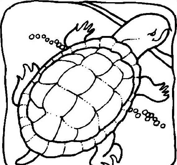 Tartaruga da colorare 62