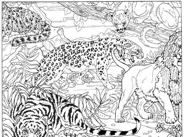 Tigre da colorare 56