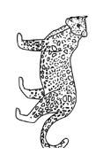 Tigre da colorare 57