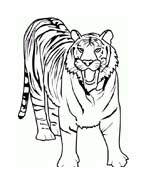 Tigre da colorare 58