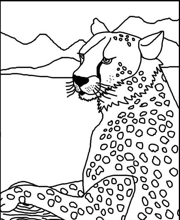 Tigre da colorare 60