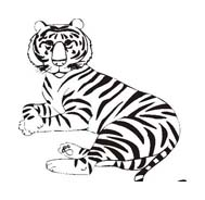 Tigre da colorare 65
