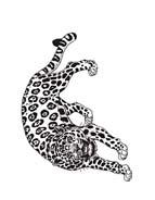 Tigre da colorare 66