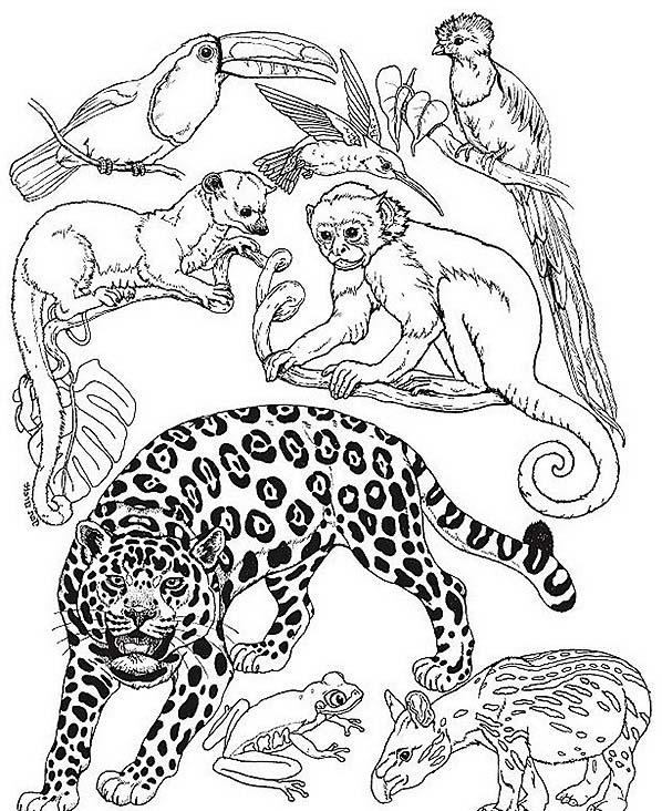 Tigre da colorare 67