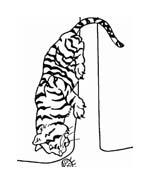 Tigre da colorare 77