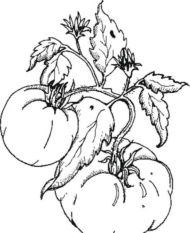 Verdura da colorare 79