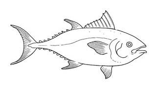 Pesce da colorare 239
