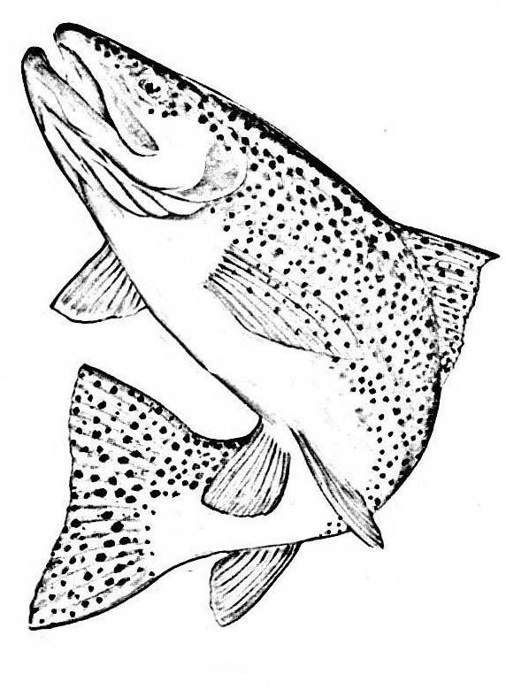Pesce da colorare 245
