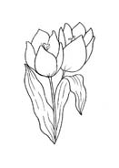 Fiore da colorare 363