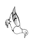 Uccello da colorare 223