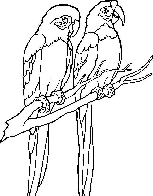 Uccello da colorare 243