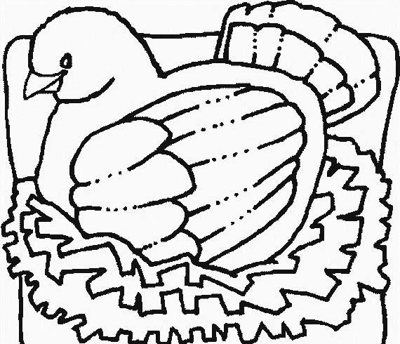 Uccello da colorare 255