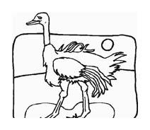 Uccello da colorare 256