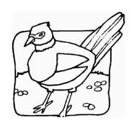 Uccello da colorare 262