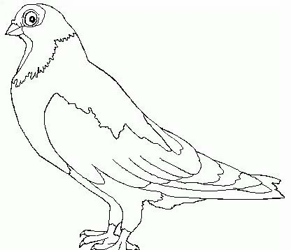 Uccello da colorare 272