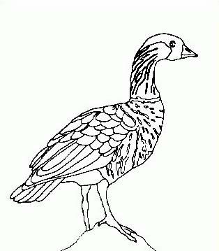 Uccello da colorare 301