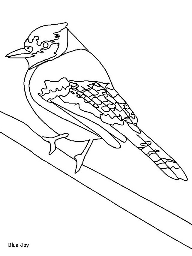 Uccello da colorare 302