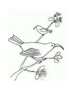 Uccello da colorare 303