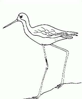 Uccello da colorare 304