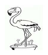 Uccello da colorare 305