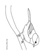 Uccello da colorare 311