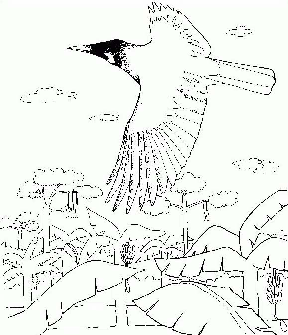 Uccello da colorare 312