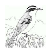 Uccello da colorare 313
