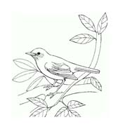 Uccello da colorare 314