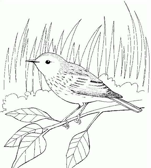 Uccello da colorare 315