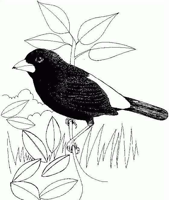 Uccello da colorare 316