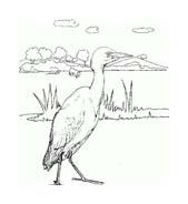 Uccello da colorare 317