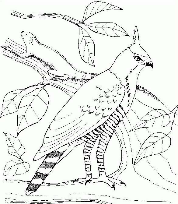 Uccello da colorare 318