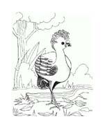 Uccello da colorare 319