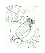 Uccello da colorare 320