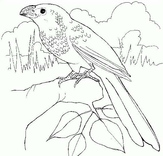 Uccello da colorare 321