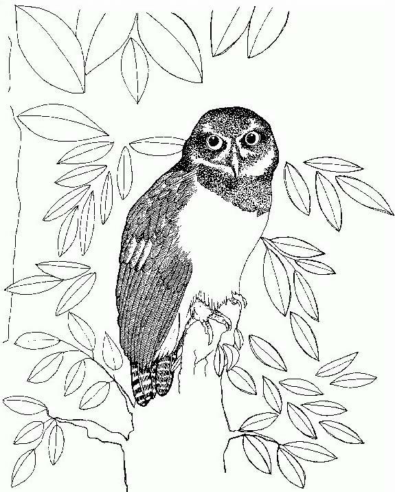Uccello da colorare 322