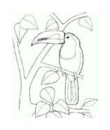 Uccello da colorare 324