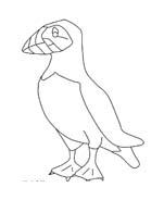 Uccello da colorare 326