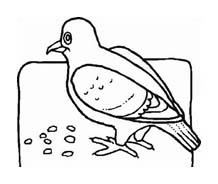 Uccello da colorare 329