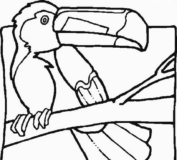 Uccello da colorare 332