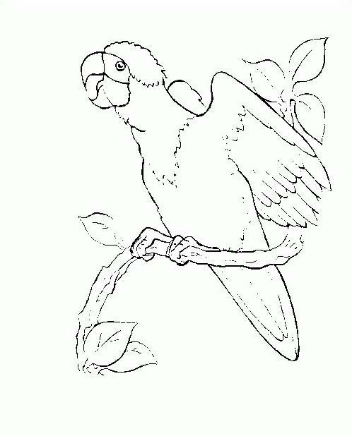 Uccello da colorare 336