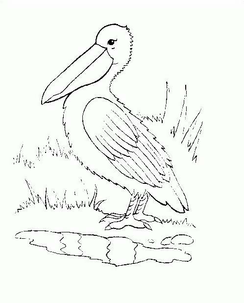 Uccello da colorare 337