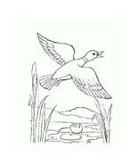 Uccello da colorare 338
