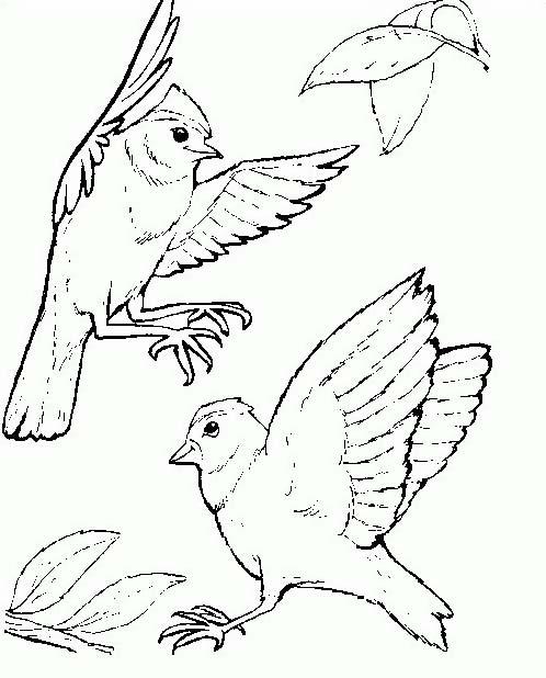 Uccello da colorare 339