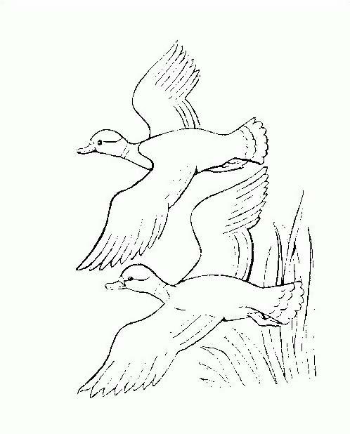 Uccello da colorare 341